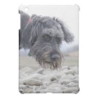 Portrait of mix breed dog, leaning over pebbles. iPad mini cases