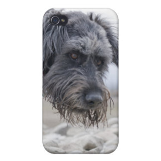 Portrait of mix breed dog, leaning over pebbles. iPhone 4 cover