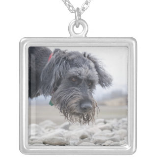 Portrait of mix breed dog, leaning over pebbles. silver plated necklace