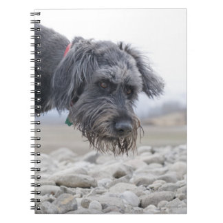 Portrait of mix breed dog, leaning over pebbles. spiral notebook