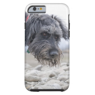 Portrait of mix breed dog, leaning over pebbles. tough iPhone 6 case
