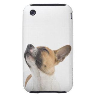 portrait of mongrel puppy tough iPhone 3 case