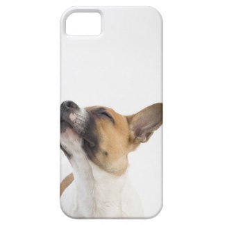 portrait of mongrel puppy iPhone 5 covers