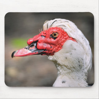 Portrait of muscovy duck mouse pad