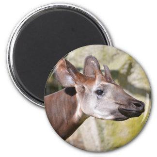Portrait of okapi (Okapia johnstoni) Magnet