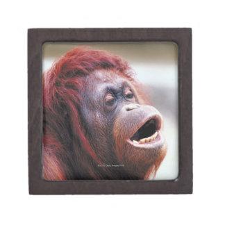 Portrait of orangutan premium jewelry boxes