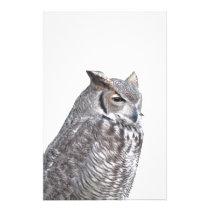 Portrait of owl isolated on white background stationery