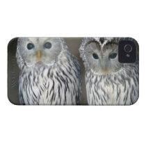 Portrait of owls iPhone 4 Case-Mate case
