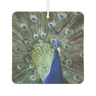 Portrait Of  Peacock With Feathers Out Air Freshener