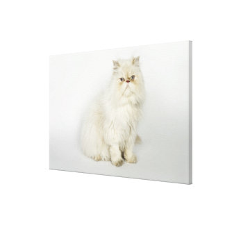 Portrait of Persian cat Gallery Wrap Canvas