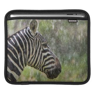 Portrait Of Plains Zebra (Equus Quagga) Standing iPad Sleeve
