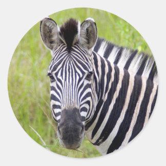 Portrait Of Plains Zebra, Hluhluwe-Umfolozi Game Classic Round Sticker