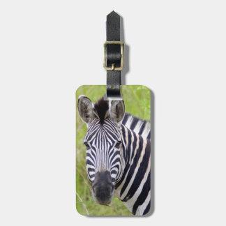 Portrait Of Plains Zebra, Hluhluwe-Umfolozi Game Luggage Tag