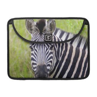 Portrait Of Plains Zebra, Hluhluwe-Umfolozi Game Sleeve For MacBook Pro