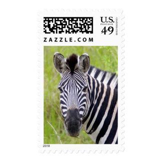 Portrait Of Plains Zebra, Hluhluwe-Umfolozi Game Postage Stamp
