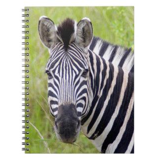 Portrait Of Plains Zebra, Hluhluwe-Umfolozi Game Spiral Notebook