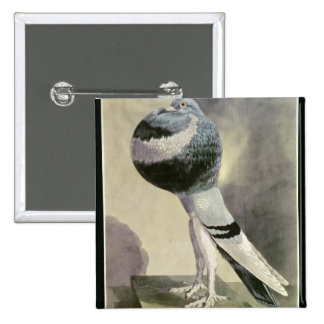 Portrait of Pouter Pigeon 2 Inch Square Button