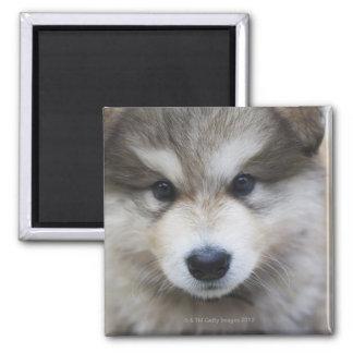 Portrait of puppy magnet