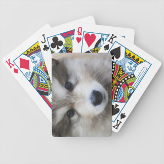Portrait of puppy playing cards