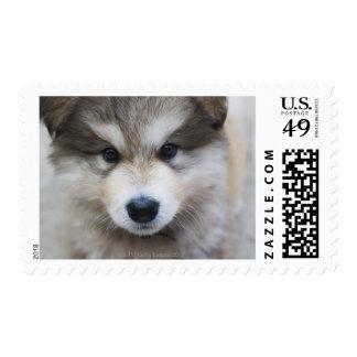 Portrait of puppy stamp