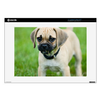 """Portrait of puppy standing in grass 15"""" laptop decal"""