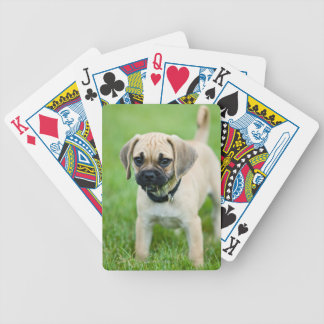 Portrait of puppy standing in grass bicycle playing cards