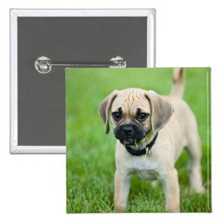Portrait of puppy standing in grass button