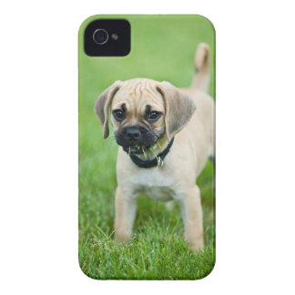 Portrait of puppy standing in grass Case-Mate iPhone 4 case