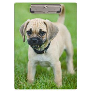 Portrait of puppy standing in grass clipboard