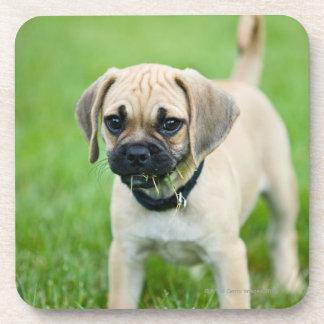 Portrait of puppy standing in grass coaster
