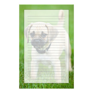 Portrait of puppy standing in grass stationery
