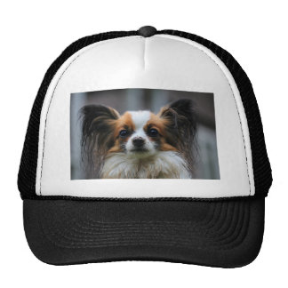 Portrait of purebred Papillon dog Trucker Hat