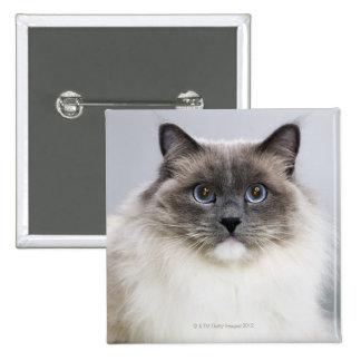 Portrait of Ragdoll cat 2 Inch Square Button