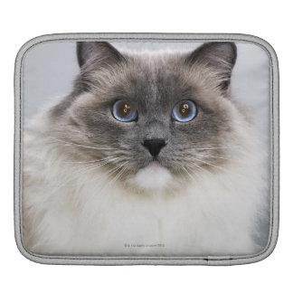 Portrait of Ragdoll cat iPad Sleeve