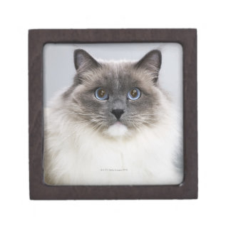 Portrait of Ragdoll cat Jewelry Box