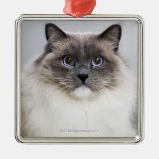 Portrait of Ragdoll cat Christmas Tree Ornament