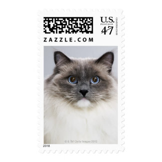 Portrait of Ragdoll cat Postage