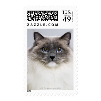 Portrait of Ragdoll cat Stamps