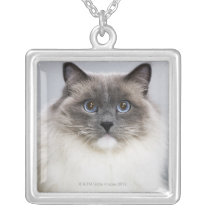 Portrait of Ragdoll cat Silver Plated Necklace