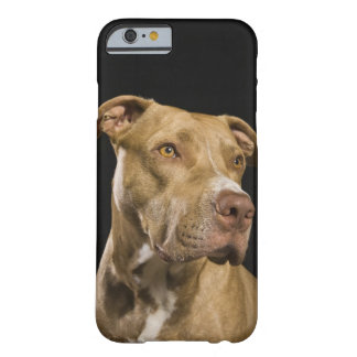 Portrait of red nose pitbull with black barely there iPhone 6 case