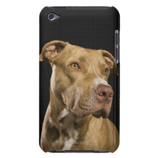 Portrait of red nose pitbull with black Case-Mate iPod touch case