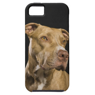 Portrait of red nose pitbull with black iPhone 5 covers