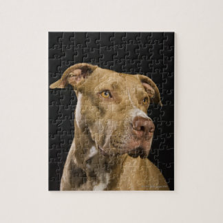 Portrait of red nose pitbull with black jigsaw puzzle