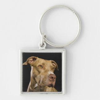 Portrait of red nose pitbull with black keychain