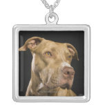 Portrait of red nose pitbull with black square pendant necklace