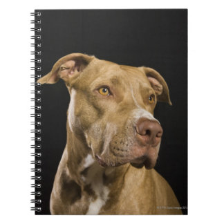 Portrait of red nose pitbull with black spiral notebook