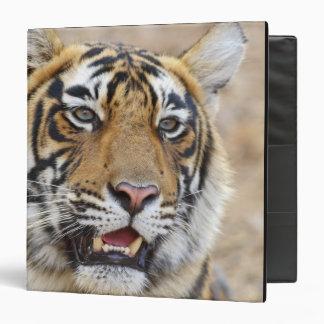 Portrait of Royal Bengal Tiger, Ranthambhor 2 3 Ring Binder