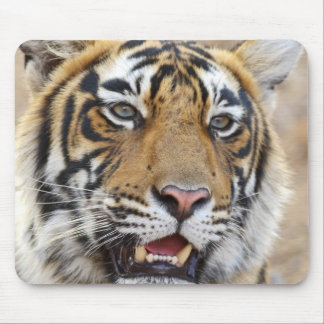 Portrait of Royal Bengal Tiger, Ranthambhor 2 Mouse Pad