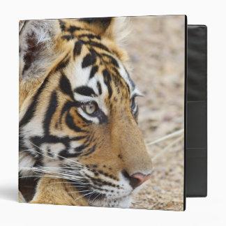 Portrait of Royal Bengal Tiger, Ranthambhor 3 3 Ring Binder