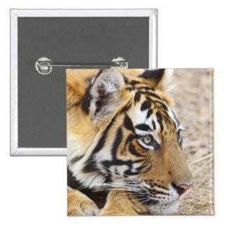 Portrait of Royal Bengal Tiger, Ranthambhor 3 Buttons